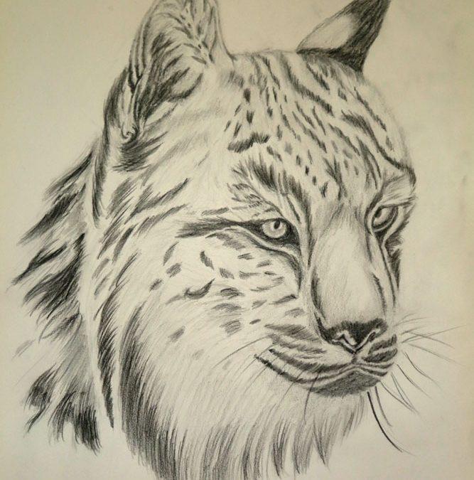 El Lince Ibérico (Lynx Pardinus)