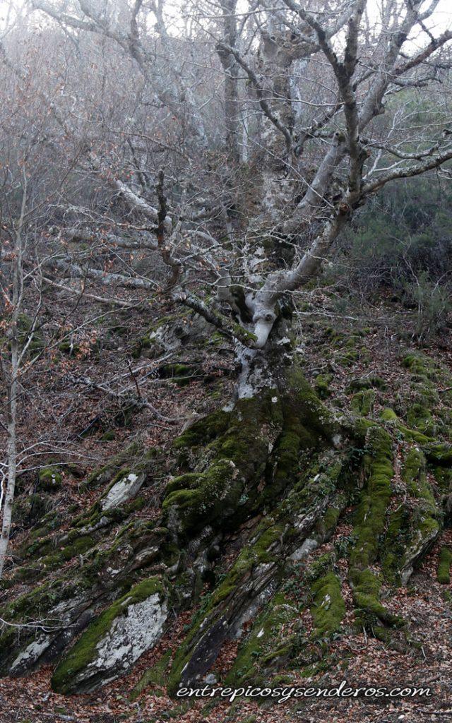 Hayedo de Montejo Sierra del Rincón