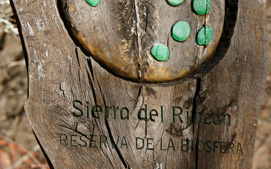 Hayedo de Montejo: un tesoro de la Sierra del Rincón